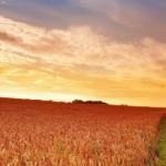 Zomer-Platteland-Landschap